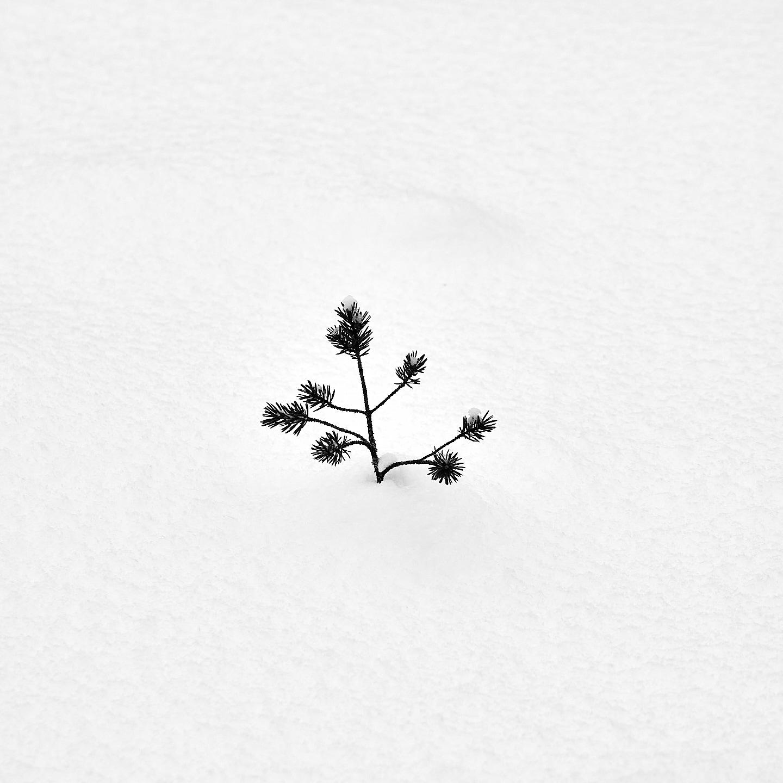 2019-02-02-Mäntysuo-0036